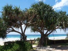 Pacific Surf Absolute Beachfront Apartments - Accommodation Brunswick Heads