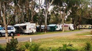 Buronga Riverside Tourist Park - Accommodation Brunswick Heads
