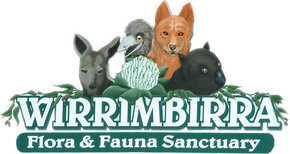 Wirrimbirra Sanctuary - Accommodation Brunswick Heads