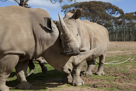 Monarto Zoo - Accommodation Brunswick Heads