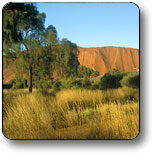Uluru - Kata Tjuta National Park - Accommodation Brunswick Heads