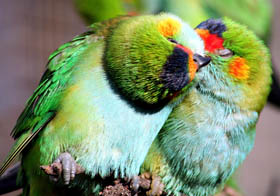Rainbow Jungle - The Australian Parrot Breeding Centre - Accommodation Brunswick Heads
