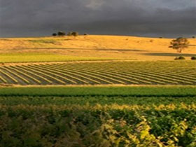Kellermeister Wines - Accommodation Brunswick Heads