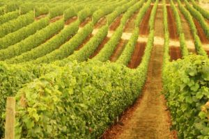 Schild Estate Wines - Accommodation Brunswick Heads