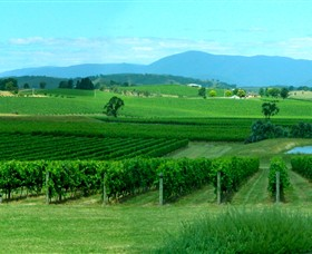 Acacia Ridge Vineyard - Accommodation Brunswick Heads