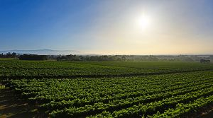 GREENSTONE VINEYARDS - Accommodation Brunswick Heads