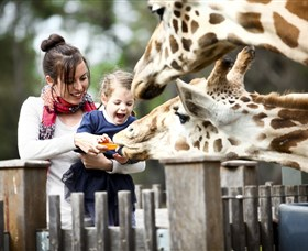 Taronga Western Plains Zoo Dubbo - Accommodation Brunswick Heads