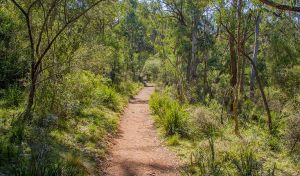Mares Forest Creek walking track - Accommodation Brunswick Heads