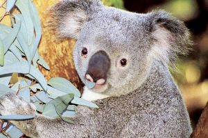 Perth Zoo General Entry Ticket and Sightseeing Cruise - Accommodation Brunswick Heads