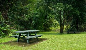 Williams River picnic area - Accommodation Brunswick Heads