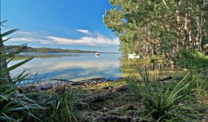 Black Oaks Picnic Area - Accommodation Brunswick Heads