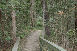 Springwood Conservation Park - Accommodation Brunswick Heads