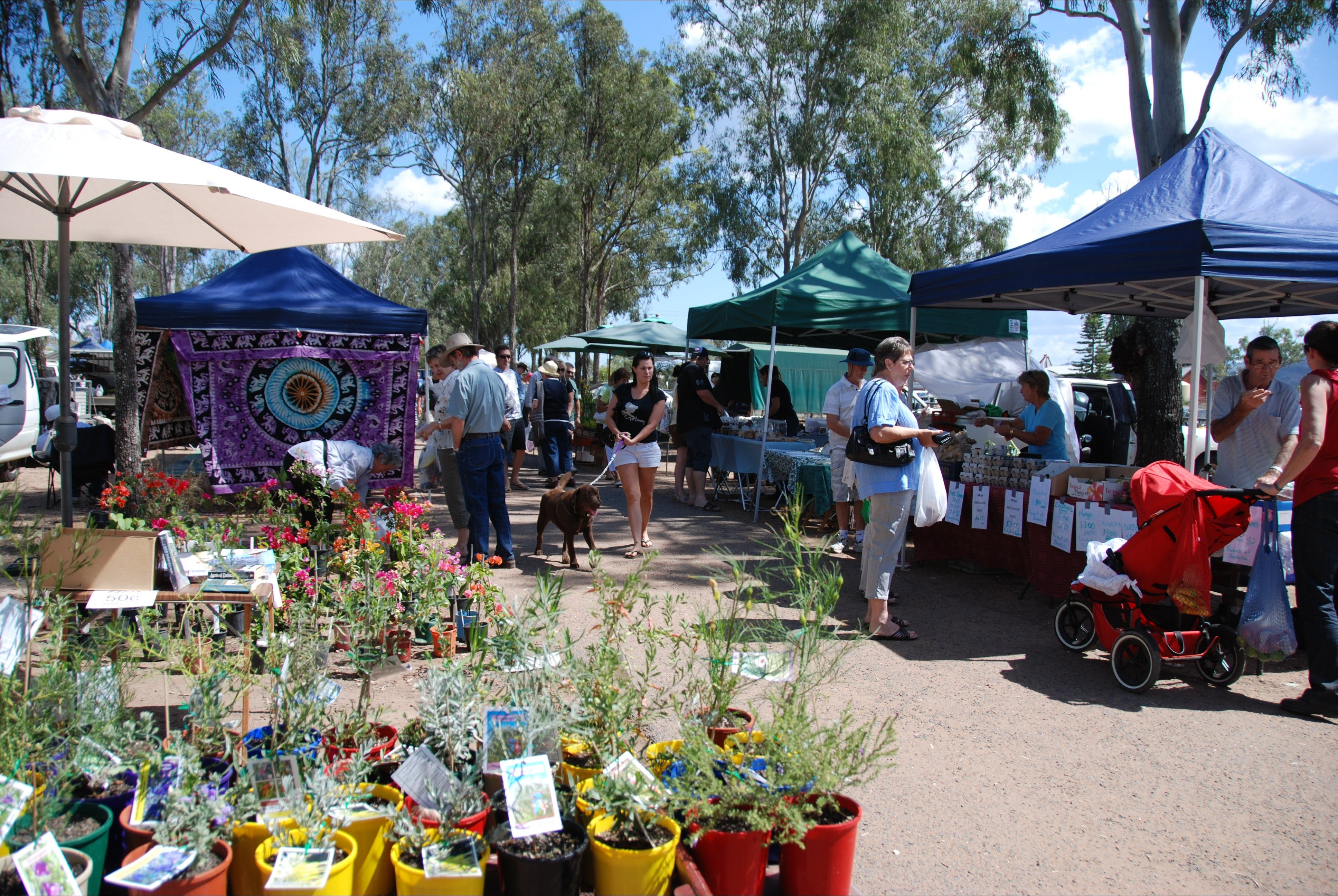 Fernvale Country Markets - Accommodation Brunswick Heads